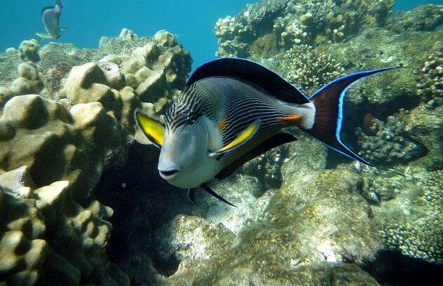 Mijn duikvakantie in Egypte