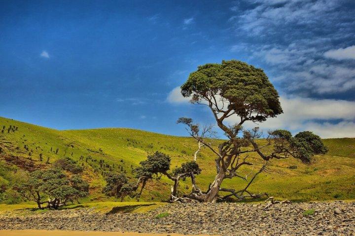 De Zuid Afrikaanse Reisbeschrijving: Een Land van Diversiteit