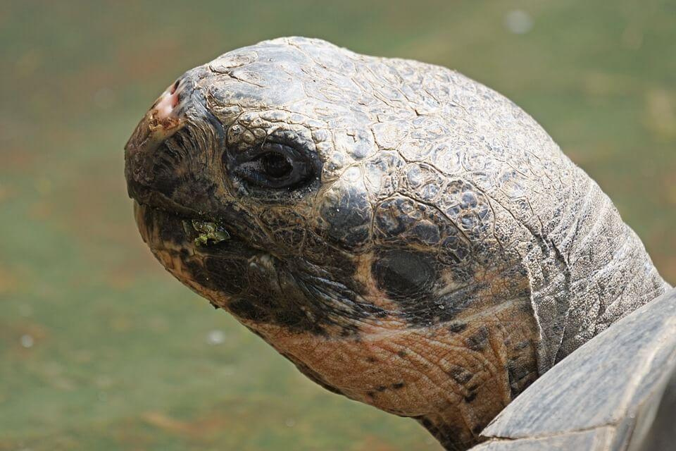 Dieren reuzenschildpadden Galapagos Eilanden