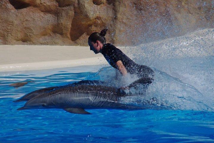 Zwemmen met dolfijnen in Europa