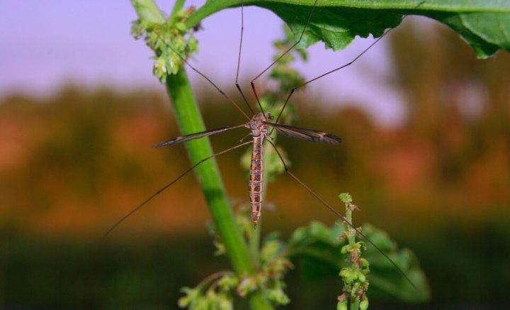 Muggen in het Buitenland