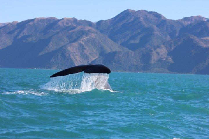 Top 8 - Dit moét je zien en doen in Nieuw-Zeeland