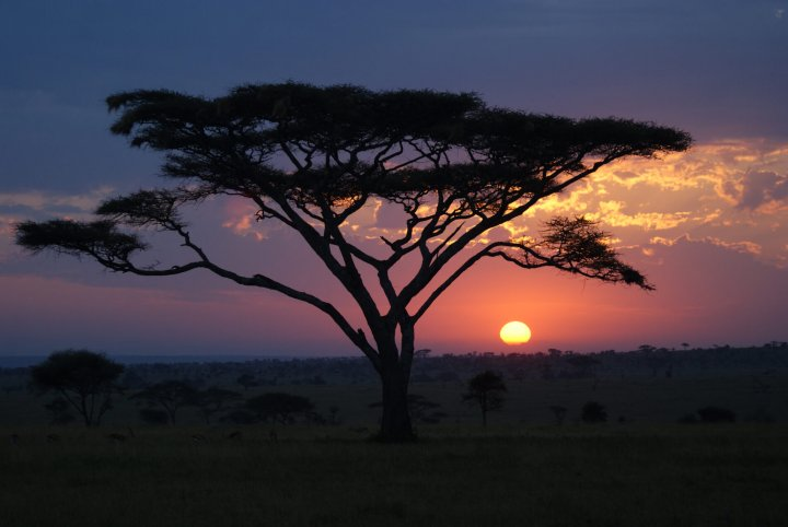 7x must-do op safari in Tanzania