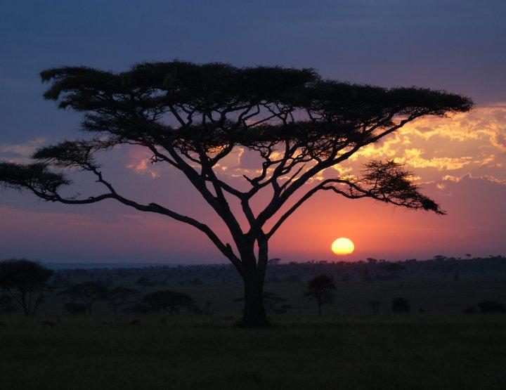 7x must-do op safari in Tanzania