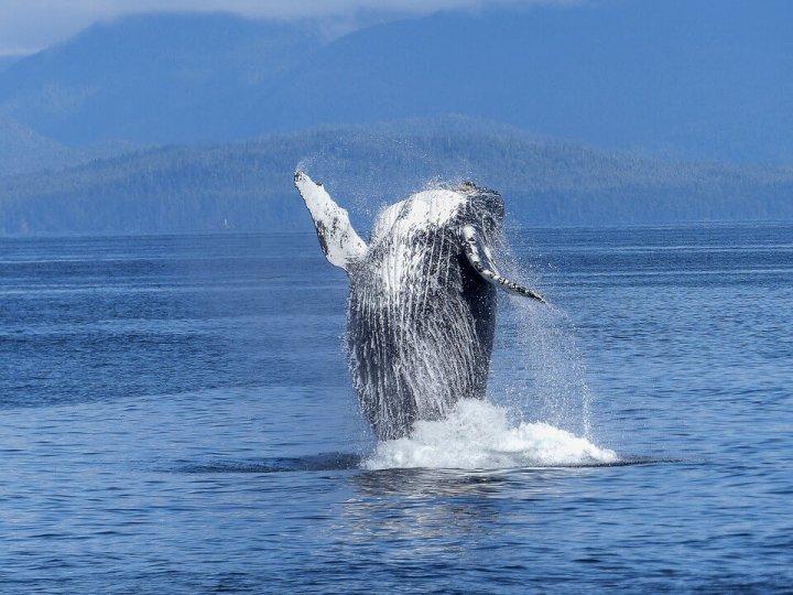 De 5 beste plekken om walvissen te spotten!