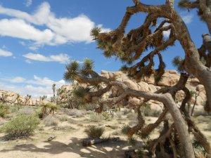 Prachtig Natuurpark In Zuiden Van California Joshua Tree National Park