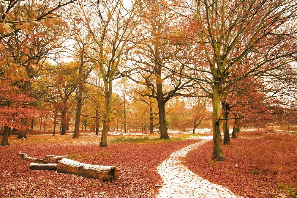 Richmond Park Londen