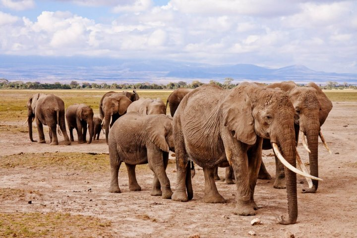 Top vakantiebestemmingen in Afrika