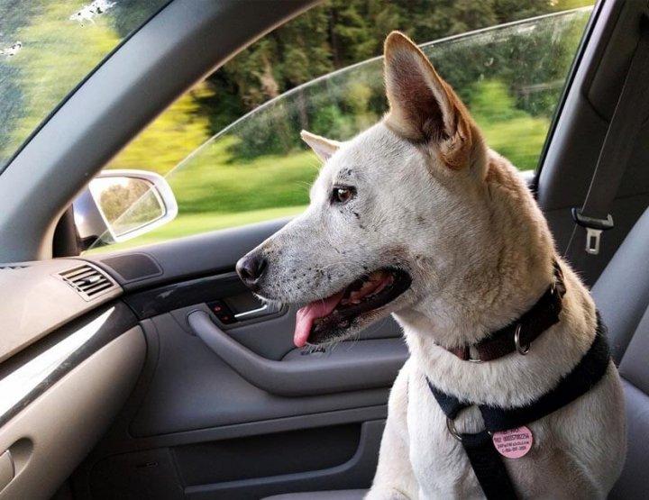 Reizen met je huisdier, waar moet je op letten?