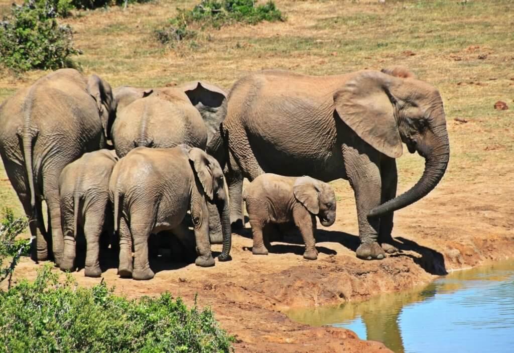 Nationale parken Afrika