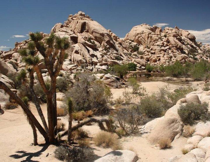Prachtig natuurpark in het zuiden van California: Joshua Tree National Park