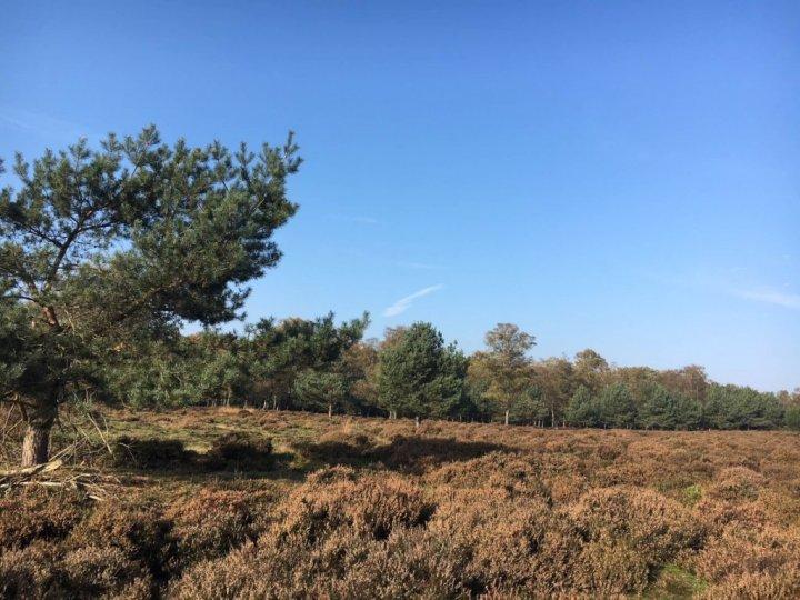 De Veluwe streek, een budgetvriendelijk fiets- en wandelparadijs