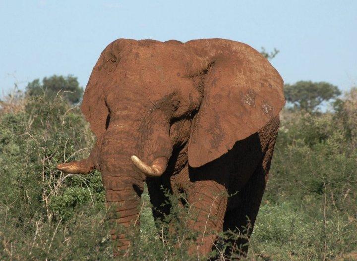 Dit zijn de beste beste landen voor een geweldige safari!