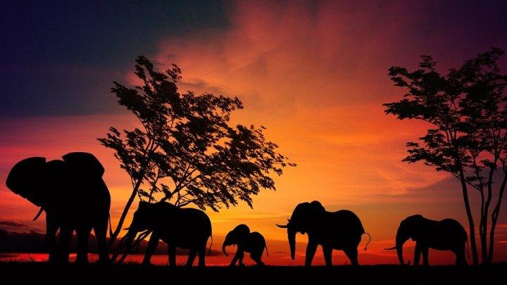 4 redenen waarom de Serengeti op jouw bucketlijst moet staan