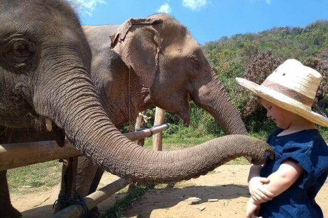 Olifanten wassen in Thailand met kinderen