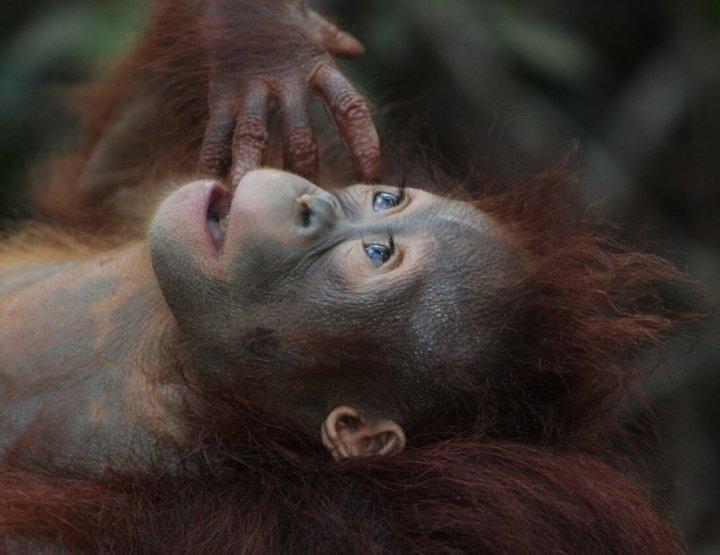 Borneo: dé vakantiebestemming voor jungleliefhebbers!