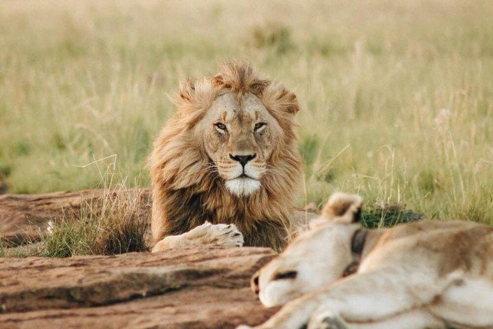 5 tips om je safari optimaal in beeld te brengen