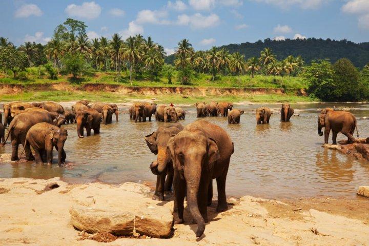 Zeven tips voor jouw reis naar Sri Lanka