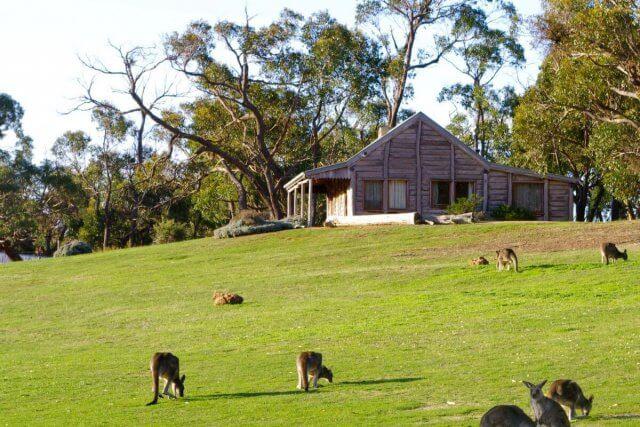 Kangoeroes op het gazon van je cottage