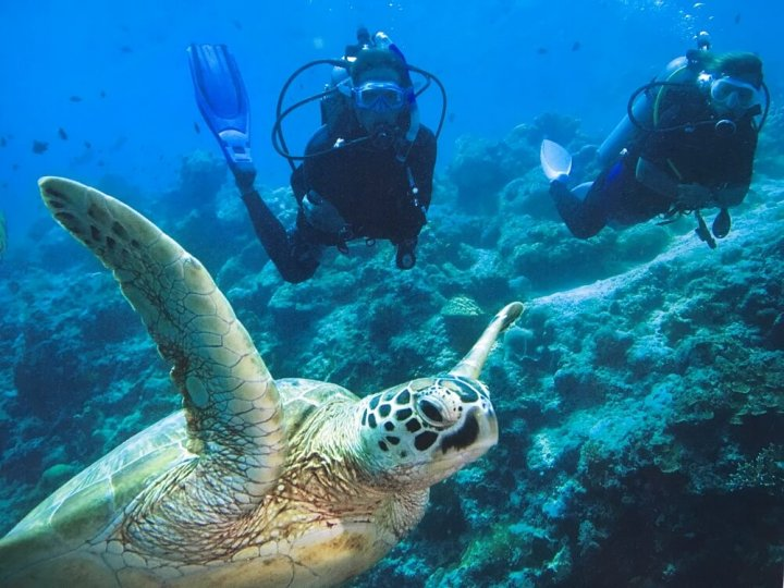 Trip Great Barrier Reef, het grootste koraalrif ter wereld