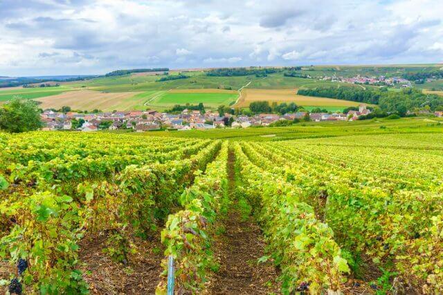 Montagne de Reims wijnen