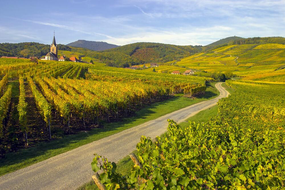 elzas wijnroute