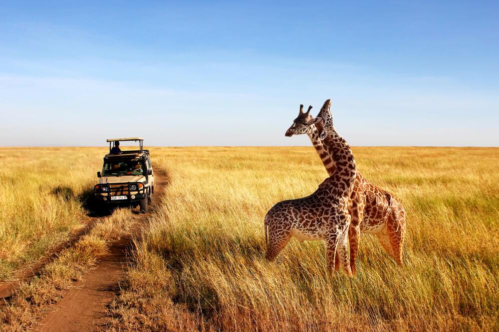 Visum Tanzania aanvragen, zo werkt het