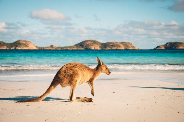 Waar moet je aan denken bij het maken van een rondreis door Australië