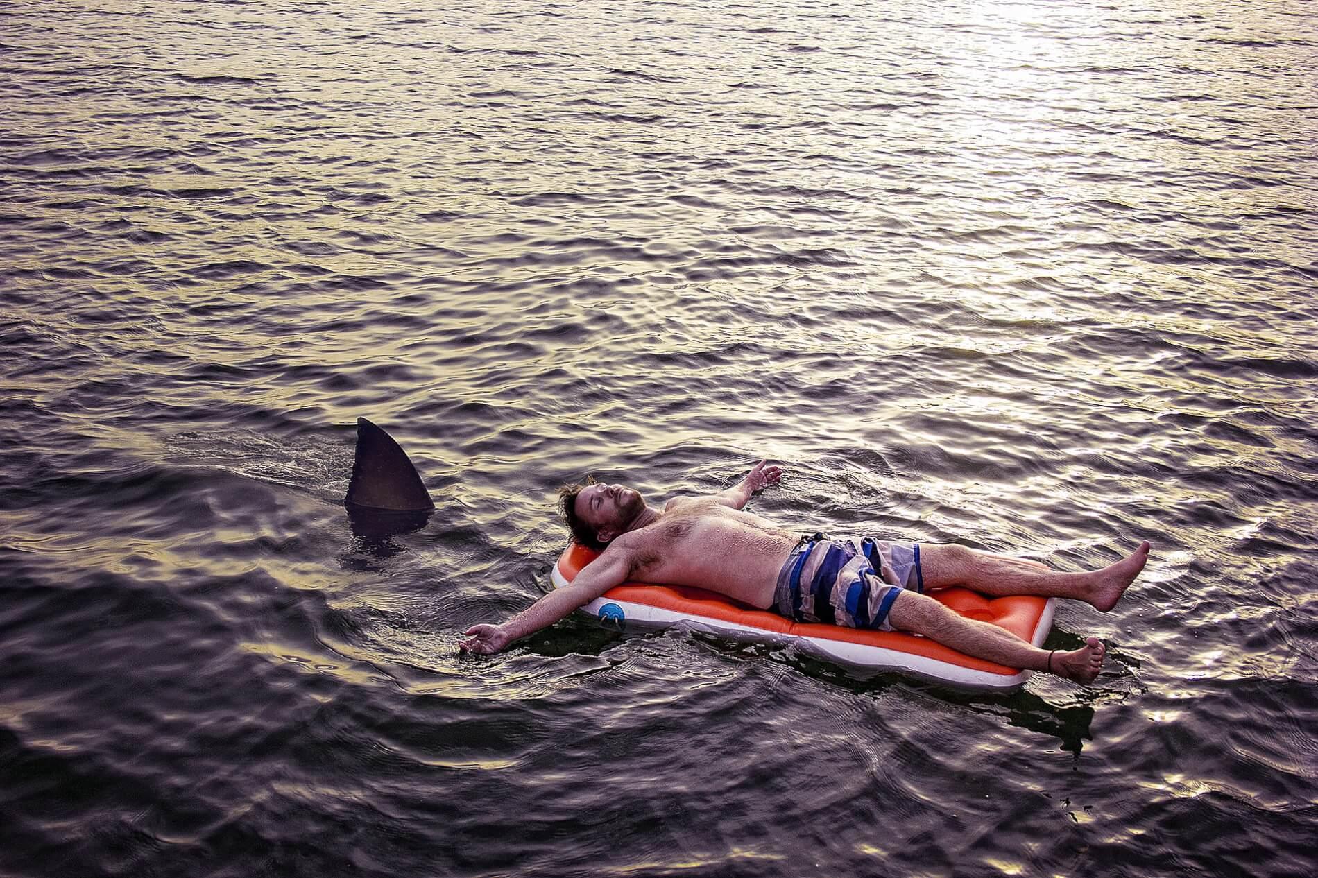 Waar zwemmen haaien