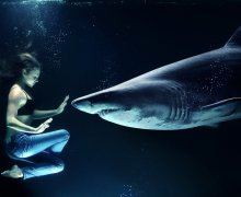 Met haaien zwemmen