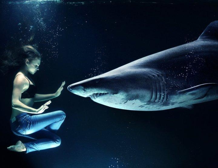 Waar kun je met haaien zwemmen? 7 geschikte plekken