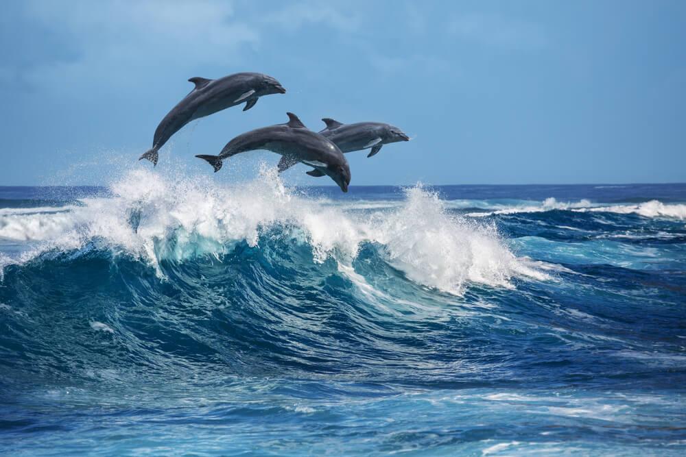 zwemmen met wilde dolfijnen