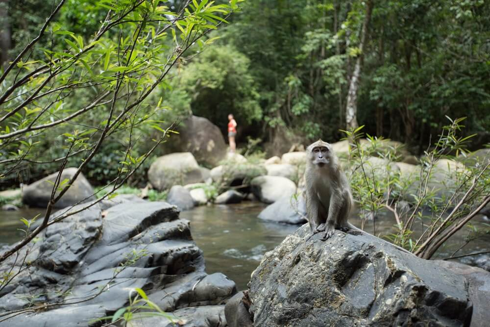 khao sok jungle expeditie