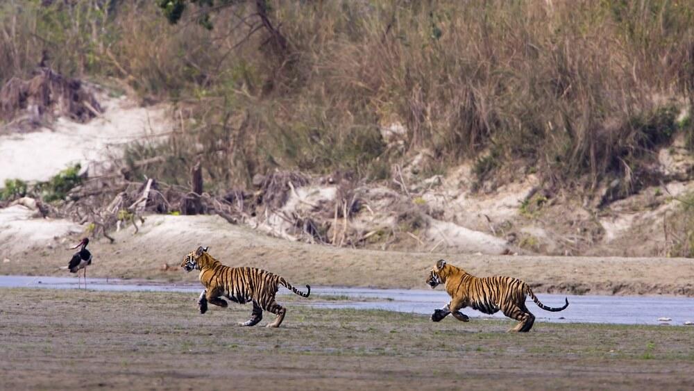 Bardia Nationaal Park Nepal;