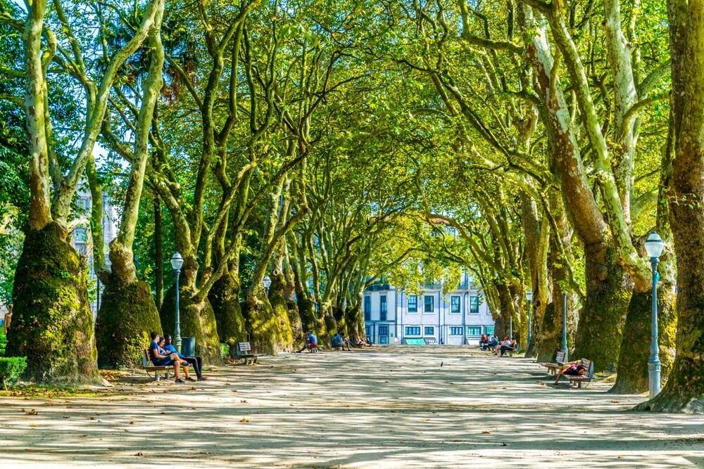 Statige bomen in Cordoaria Park, een wijk in Porto