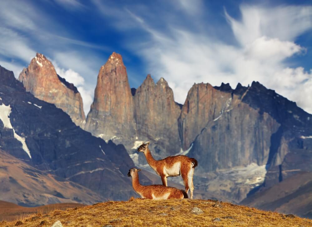 Twee vicunas zijn zichtbaar voor de enorme ruige bergtoppen in Torres del Paine