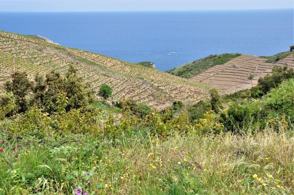 Wijn uit Collioure