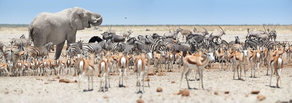 Safari in Afrika - Namibie