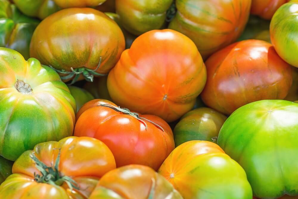 """Typische tomaten uit Almeria, tomaten """"raf"""". Groen, rode tomaten liggen op elkaar."""