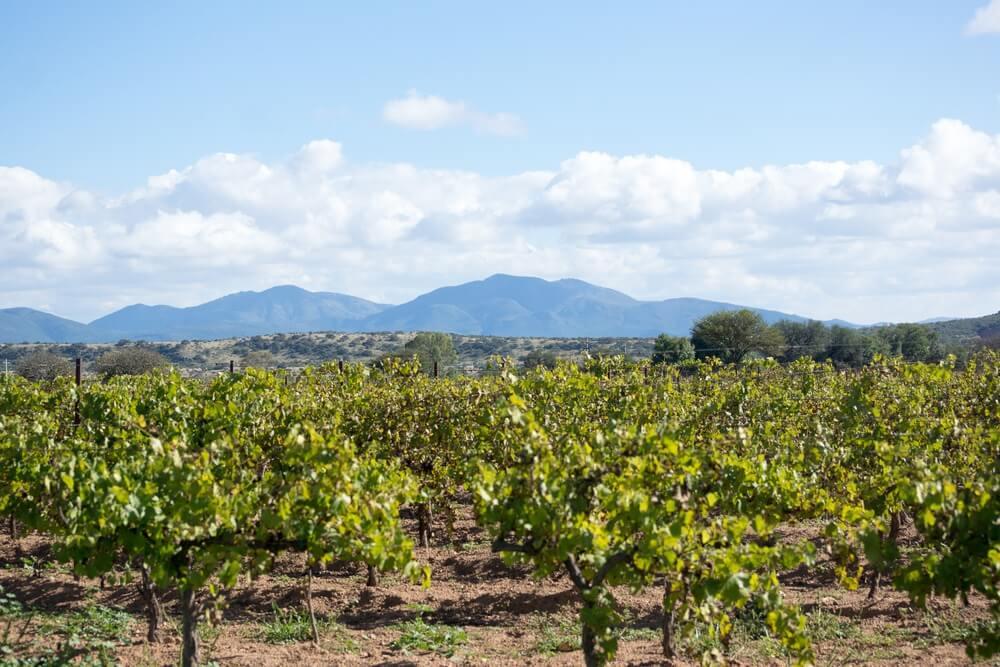 Queretaro landschap van wijngaard Mexico.