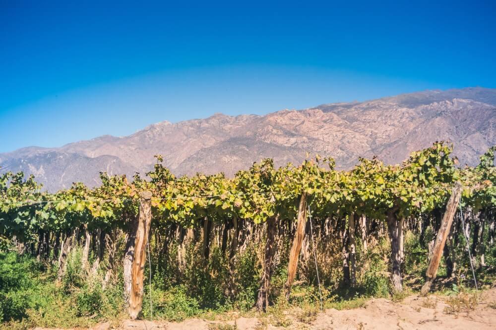 Het landschap van het wijnstokgebied in Cafayate, Salta, Argentinië.