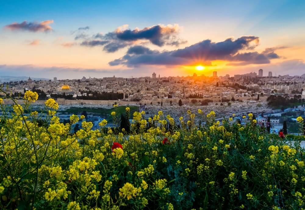Uitzicht op Jeruzalem vanaf de Olijfberg. Gele bloemen op de voorgrond, ondergaande zon.