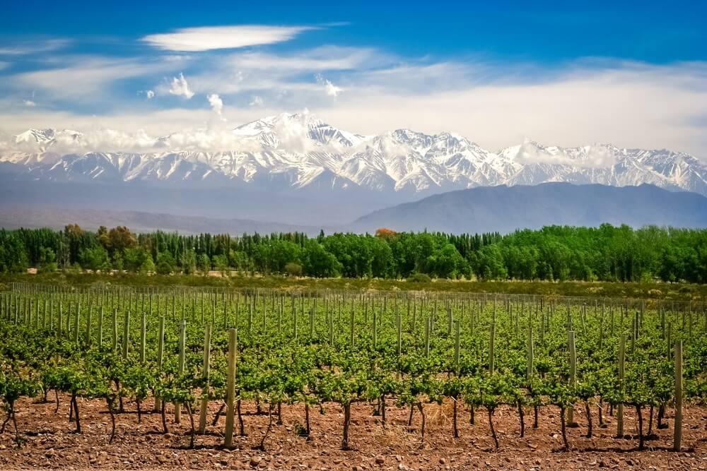 Wijngaarden in Mendoza voor de hoge besneeuwde bergtoppen van de Andes.