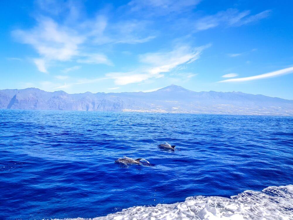 Dolfijnen zwemmen in de Atlantische Oceaan voor Los Gigantes, Canarische eilanden, Tenerife