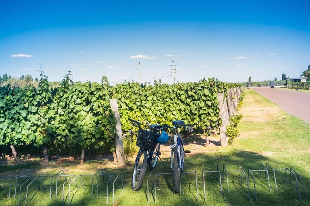 Twee fiesten staan voor de wijngaard in Mendoza, Argentinië. Blauwe lucht.
