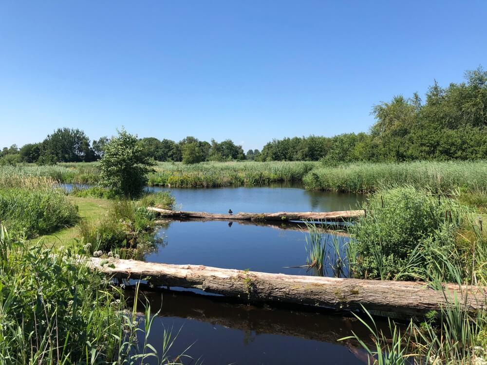 Natuur in het Alde Feanen Nationaal Park in Friesland Nederland.
