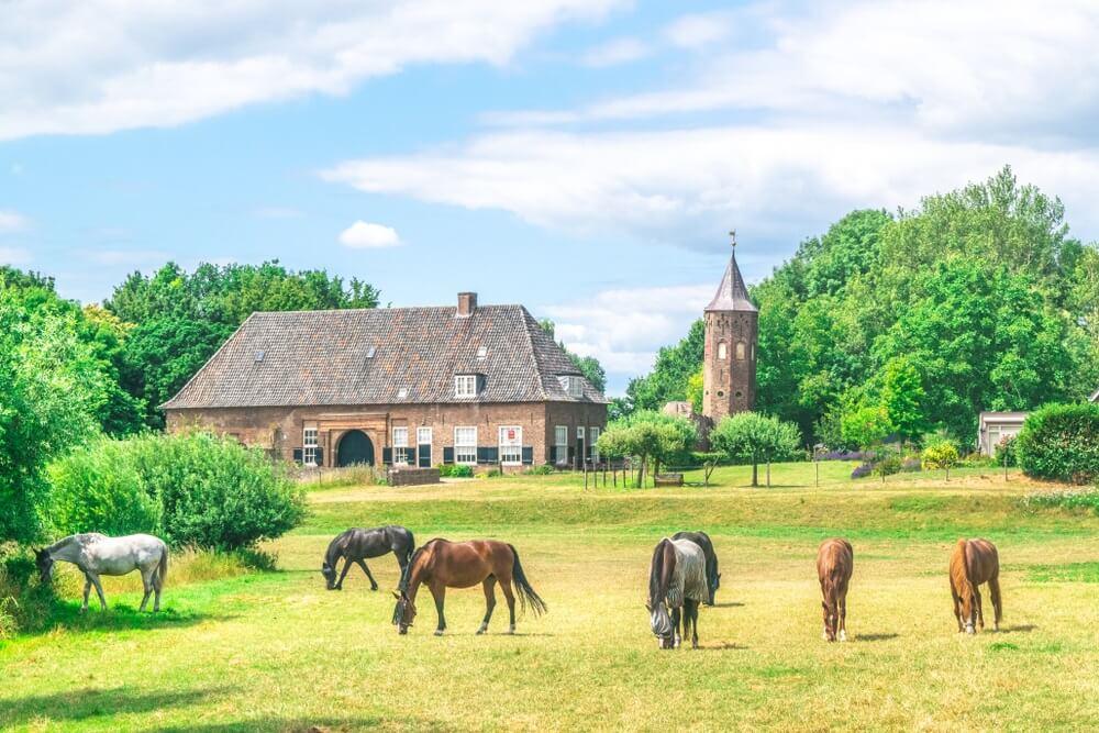 Een groep paarden die gras eten in een Nederlandse weide voor het Nederlandse traditionele dorp de Ooij in Gelderland, Nederland.