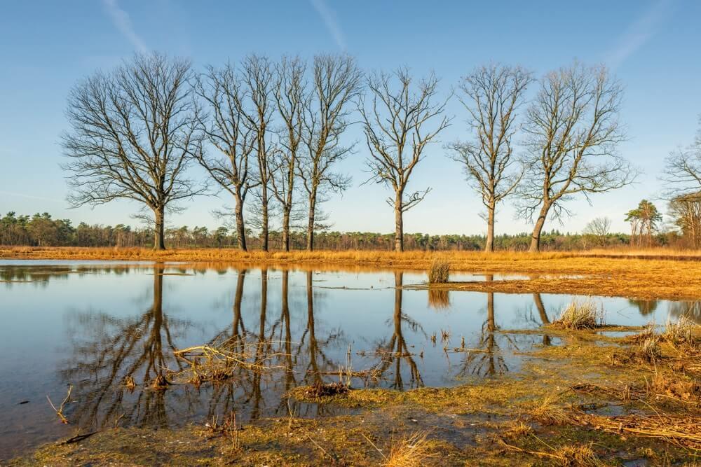 Bomen met kale takken weerspiegeld in de spiegel glad water van slechts in het landschap van de Galderse Heide. De Galderse Heide is onderdeel van de Ecologische Hoofdstructuur in Nederland.