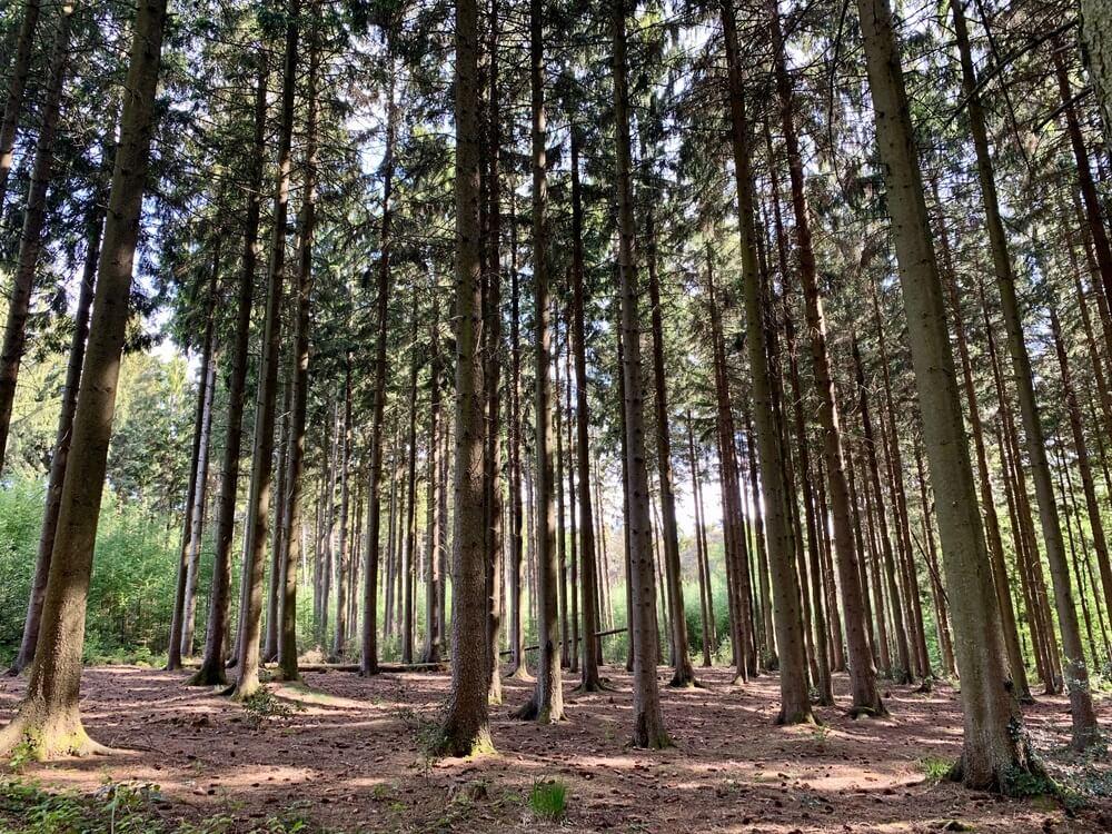 Het mooie Vijlse Bos, Zuid-Limburg.