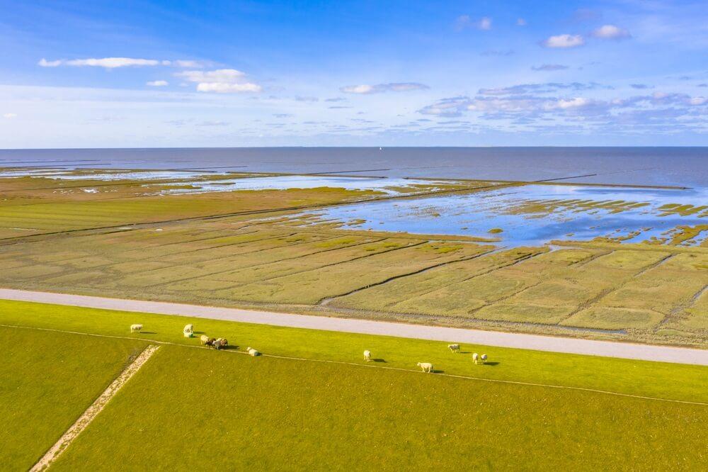Luchtfoto van schapen die grazen op de zeedijk in nationaal park Tidal Marshland en Unesco Werelderfgoedgebied Waddenzee in de provincie Groningen. Nederland.